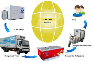 Transport Refrigeration Unit Plays a Critical Role in Cold Chain Logistics